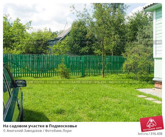 На садовом участке в Подмосковье, фото № 316438, снято 9 июля 2005 г. (c) Анатолий Заводсков / Фотобанк Лори
