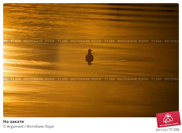 На закате, фото № 71558, снято 23 июня 2007 г. (c) Argument / Фотобанк Лори