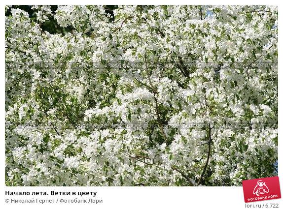 Начало лета. Ветки в цвету, фото № 6722, снято 14 июня 2006 г. (c) Николай Гернет / Фотобанк Лори