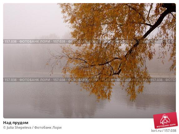 Над прудом, фото № 157038, снято 21 января 2017 г. (c) Julia Shepeleva / Фотобанк Лори