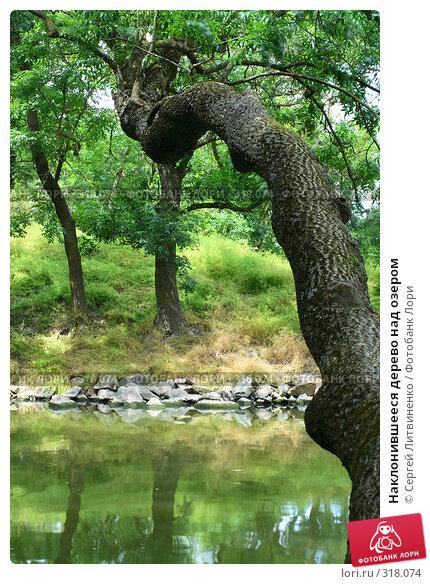 Купить «Наклонившееся дерево над озером», фото № 318074, снято 8 июня 2008 г. (c) Сергей Литвиненко / Фотобанк Лори