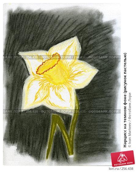 Нарцисс на темном фоне (рисунок пастелью), иллюстрация № 256438 (c) Василий Каргандюм / Фотобанк Лори