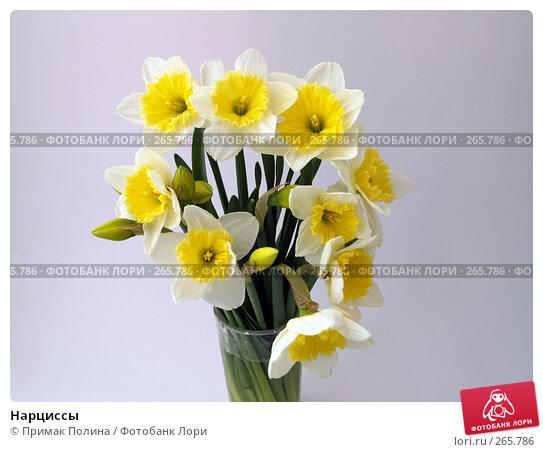 Нарциссы, фото № 265786, снято 12 апреля 2008 г. (c) Примак Полина / Фотобанк Лори