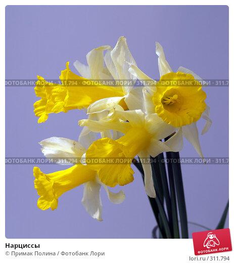 Нарциссы, фото № 311794, снято 12 апреля 2008 г. (c) Примак Полина / Фотобанк Лори
