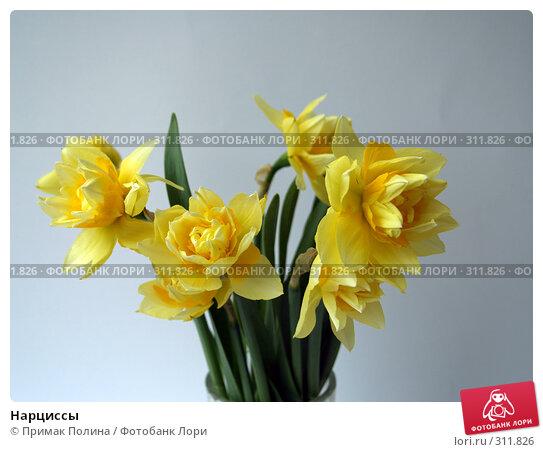 Нарциссы, фото № 311826, снято 14 апреля 2008 г. (c) Примак Полина / Фотобанк Лори