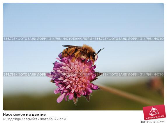 Насекомое на цветке, фото № 314798, снято 11 июня 2007 г. (c) Надежда Келембет / Фотобанк Лори