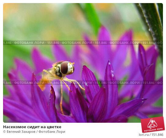 Насекомое сидит на цветке, фото № 151846, снято 15 июля 2007 г. (c) Евгений Захаров / Фотобанк Лори