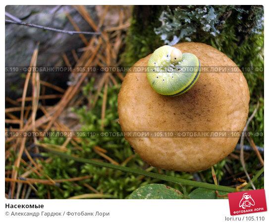 Насекомые, фото № 105110, снято 28 октября 2016 г. (c) Александр Гардюк / Фотобанк Лори