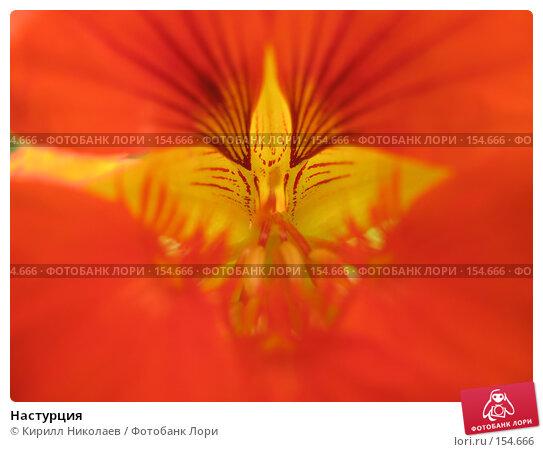 Настурция, фото № 154666, снято 27 августа 2006 г. (c) Кирилл Николаев / Фотобанк Лори