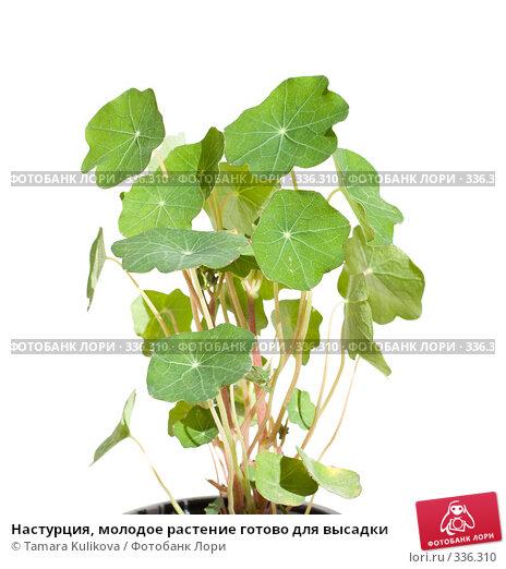 Купить «Настурция, молодое растение готово для высадки», фото № 336310, снято 27 июня 2008 г. (c) Tamara Kulikova / Фотобанк Лори