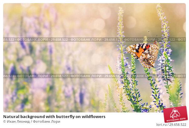 Купить «Natural background with butterfly on wildflowers», фото № 29658522, снято 6 июля 2018 г. (c) Икан Леонид / Фотобанк Лори