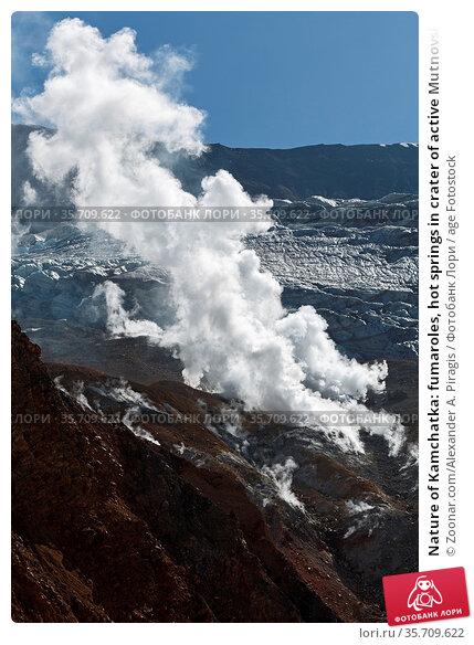 Nature of Kamchatka: fumaroles, hot springs in crater of active Mutnovsky... Стоковое фото, фотограф Zoonar.com/Alexander A. Piragis / age Fotostock / Фотобанк Лори