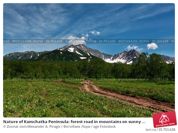 Nature of Kamchatka Peninsula: forest road in mountains on sunny ... Стоковое фото, фотограф Zoonar.com/Alexander A. Piragis / age Fotostock / Фотобанк Лори