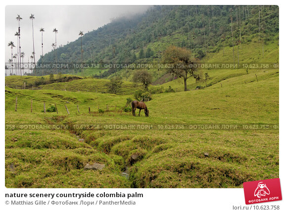 nature scenery countryside colombia palm. Стоковое фото, фотограф Matthias Gille / PantherMedia / Фотобанк Лори