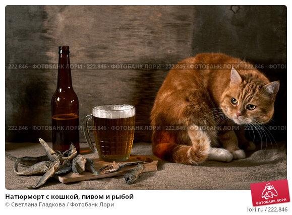 Натюрморт с кошкой, пивом и рыбой, фото № 222846, снято 30 сентября 2007 г. (c) Cветлана Гладкова / Фотобанк Лори