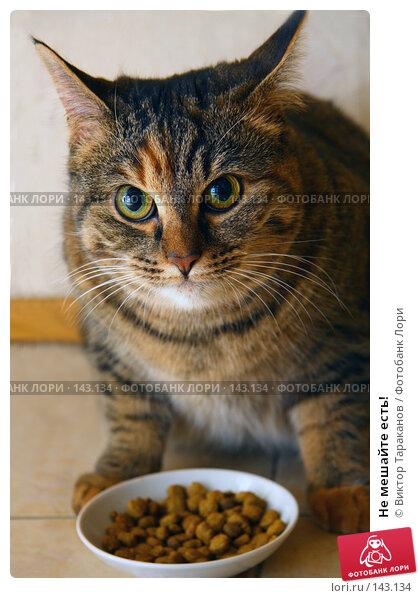 Купить «Не мешайте есть!», эксклюзивное фото № 143134, снято 14 декабря 2017 г. (c) Виктор Тараканов / Фотобанк Лори