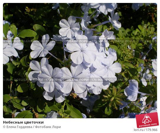Купить «Небесные цветочки», фото № 179966, снято 4 октября 2006 г. (c) Елена Гордеева / Фотобанк Лори