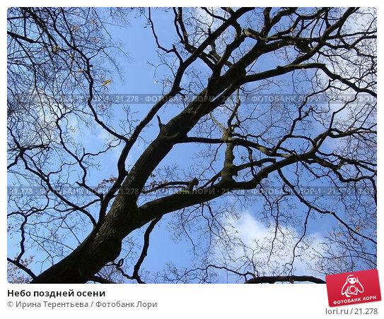 Купить «Небо поздней осени», эксклюзивное фото № 21278, снято 28 октября 2004 г. (c) Ирина Терентьева / Фотобанк Лори