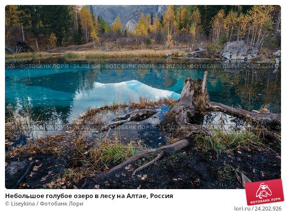 Купить «Небольшое голубое озеро в лесу на Алтае, Россия», фото № 24202926, снято 27 сентября 2016 г. (c) Liseykina / Фотобанк Лори