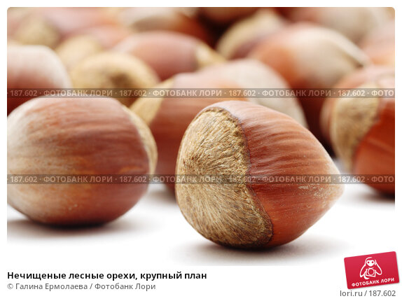 Нечищеные лесные орехи, крупный план, фото № 187602, снято 15 января 2008 г. (c) Галина Ермолаева / Фотобанк Лори