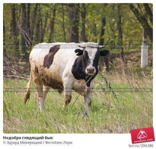 Недобро глядящий бык, фото № 294586, снято 2 мая 2008 г. (c) Эдуард Межерицкий / Фотобанк Лори