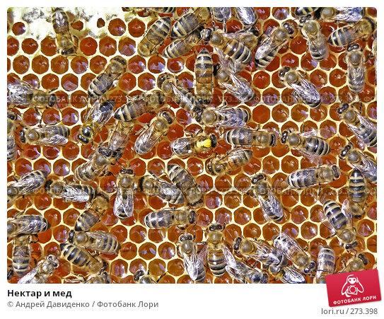 Купить «Нектар и мед», фото № 273398, снято 28 июля 2005 г. (c) Андрей Давиденко / Фотобанк Лори