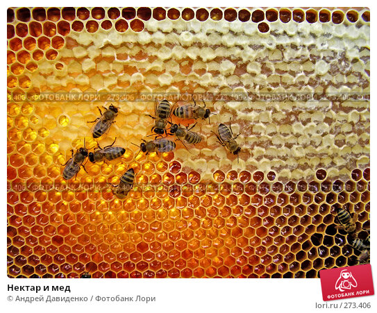 Купить «Нектар и мед», фото № 273406, снято 14 июля 2007 г. (c) Андрей Давиденко / Фотобанк Лори