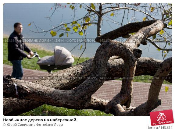 Необычное дерево на набережной, фото № 143614, снято 17 октября 2007 г. (c) Юрий Синицын / Фотобанк Лори