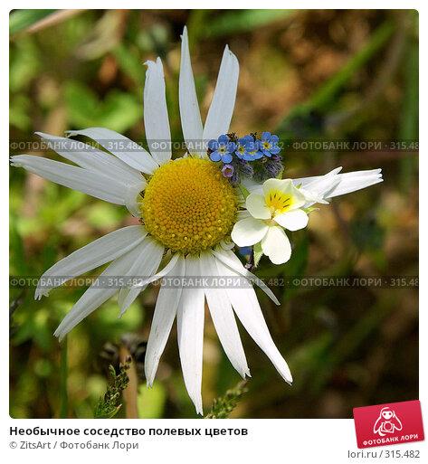 Необычное соседство полевых цветов, фото № 315482, снято 8 июня 2008 г. (c) ZitsArt / Фотобанк Лори