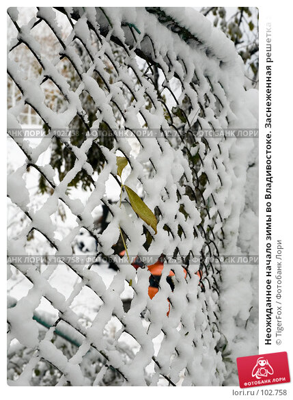 Неожиданное начало зимы во Владивостоке. Заснеженная решетка забора, фото № 102758, снято 30 марта 2017 г. (c) TigerFox / Фотобанк Лори