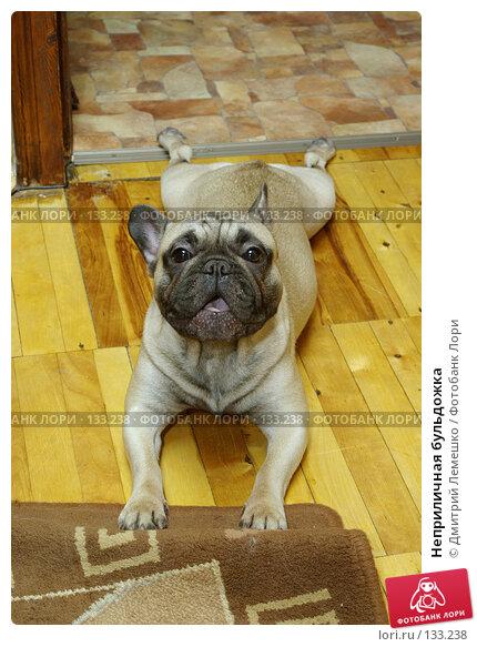 Купить «Неприличная бульдожка», фото № 133238, снято 14 ноября 2007 г. (c) Дмитрий Лемешко / Фотобанк Лори