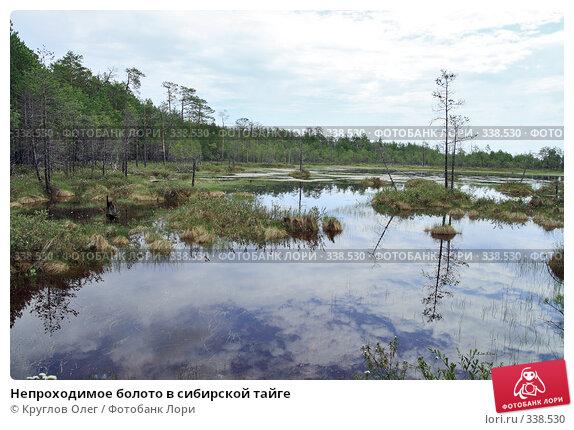Непроходимое болото в сибирской тайге, фото № 338530, снято 19 июня 2008 г. (c) Круглов Олег / Фотобанк Лори