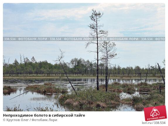 Непроходимое болото в сибирской тайге, фото № 338534, снято 19 июня 2008 г. (c) Круглов Олег / Фотобанк Лори