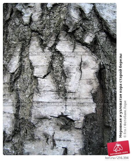 Неровная и узловатая кора старой березы, фото № 216394, снято 8 мая 2004 г. (c) Fro / Фотобанк Лори
