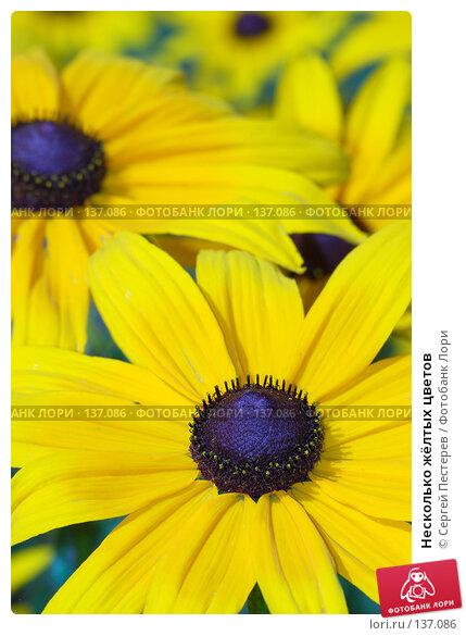 Несколько жёлтых цветов, фото № 137086, снято 17 июля 2007 г. (c) Сергей Пестерев / Фотобанк Лори