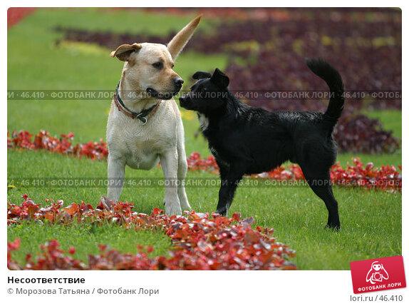 Несоответствие, фото № 46410, снято 26 мая 2006 г. (c) Морозова Татьяна / Фотобанк Лори