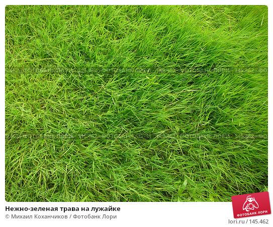 Нежно-зеленая трава на лужайке, фото № 145462, снято 21 июля 2007 г. (c) Михаил Коханчиков / Фотобанк Лори