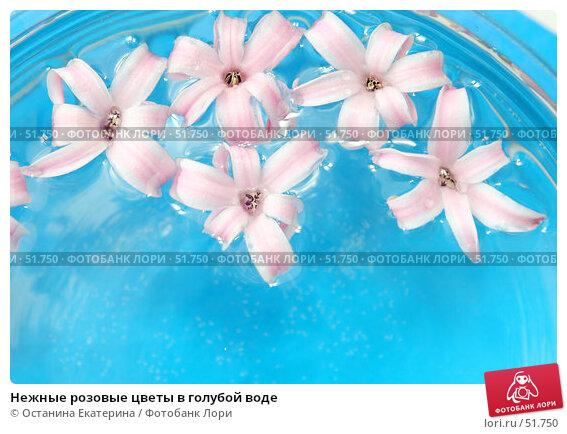 Нежные розовые цветы в голубой воде, фото № 51750, снято 13 марта 2007 г. (c) Останина Екатерина / Фотобанк Лори