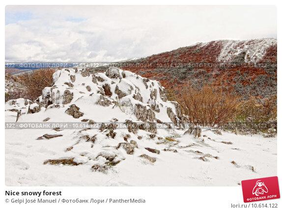 Nice snowy forest . Стоковое фото, фотограф Gelpi José Manuel / PantherMedia / Фотобанк Лори