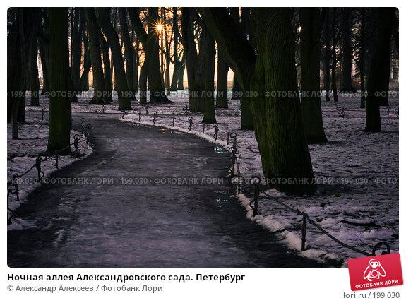 Ночная аллея Александровского сада. Петербург, эксклюзивное фото № 199030, снято 7 февраля 2008 г. (c) Александр Алексеев / Фотобанк Лори