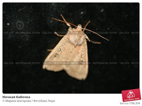 Ночная бабочка, фото № 156374, снято 15 июля 2007 г. (c) Марина Шатерова / Фотобанк Лори
