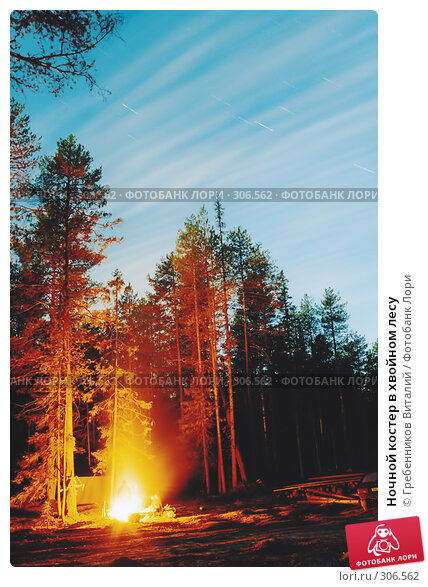 Купить «Ночной костер в хвойном лесу», фото № 306562, снято 25 апреля 2018 г. (c) Гребенников Виталий / Фотобанк Лори