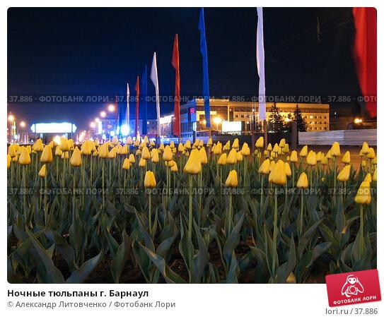 Ночные тюльпаны г. Барнаул, фото № 37886, снято 23 февраля 2017 г. (c) Александр Литовченко / Фотобанк Лори
