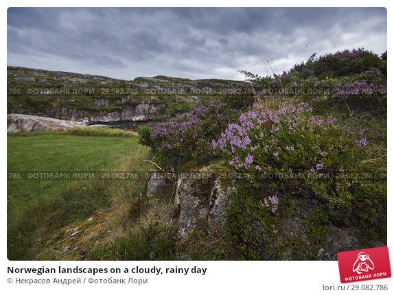 Купить «Norwegian landscapes on a cloudy, rainy day», фото № 29082786, снято 4 августа 2018 г. (c) Некрасов Андрей / Фотобанк Лори