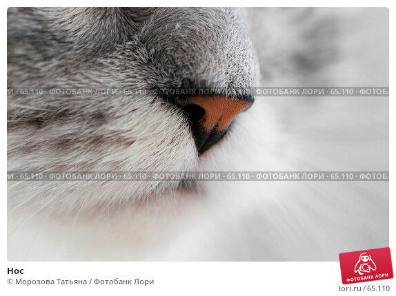 Нос, фото № 65110, снято 25 июня 2006 г. (c) Морозова Татьяна / Фотобанк Лори