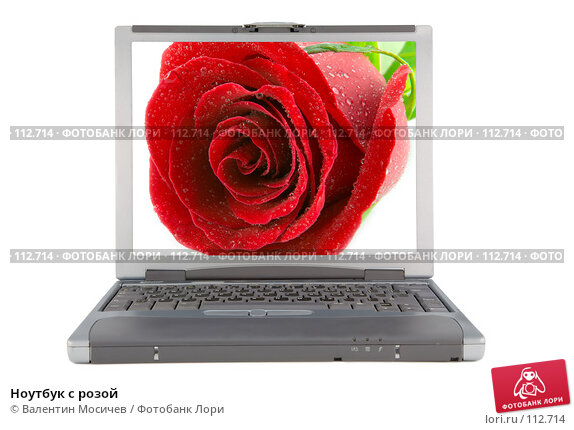 Ноутбук с розой, фото № 112714, снято 16 февраля 2007 г. (c) Валентин Мосичев / Фотобанк Лори