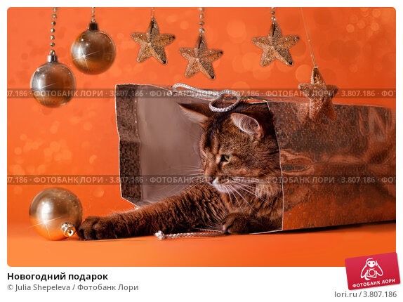 Купить «Новогодний подарок», фото № 3807186, снято 13 ноября 2010 г. (c) Julia Shepeleva / Фотобанк Лори