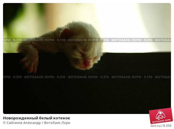 Купить «Новорожденный белый котенок», фото № 9310, снято 4 апреля 2005 г. (c) Сайганов Александр / Фотобанк Лори