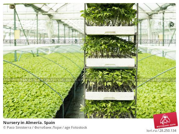 Купить «Nursery in Almería. Spain», фото № 28250134, снято 3 января 2018 г. (c) age Fotostock / Фотобанк Лори
