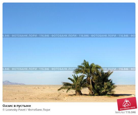 Купить «Оазис в пустыне», фото № 116846, снято 9 января 2006 г. (c) Losevsky Pavel / Фотобанк Лори